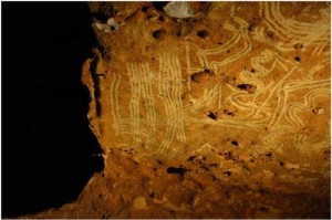 La grotte de Rouffignac