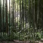 Bamboetuin van Prafrance