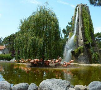 Zoo van La Palmyre
