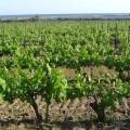 vakantie Languedoc