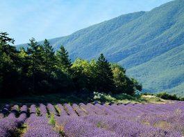 Vijf bijzondere dorpjes in de Luberon