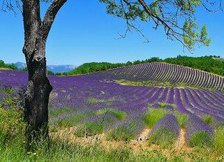 Tips voor een heerlijke vakantie in Drôme